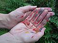 Deryn Hands0675