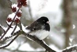 Birdimageexercise1