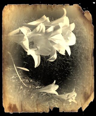 Lilieswhitevignetteburnedpaper