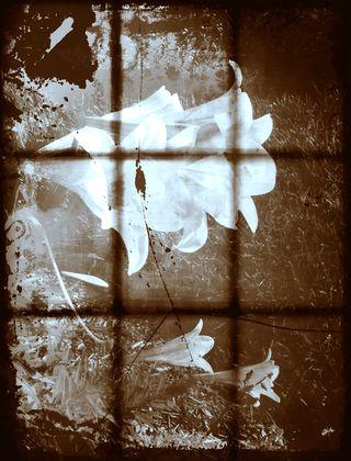 Lilies+CameraBag1974adjsm