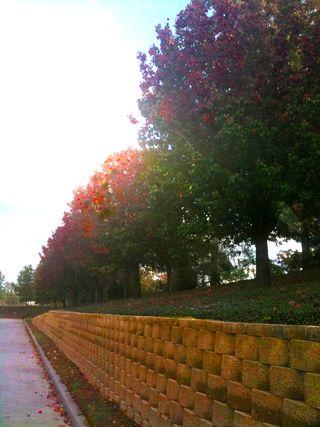VibrantTrees