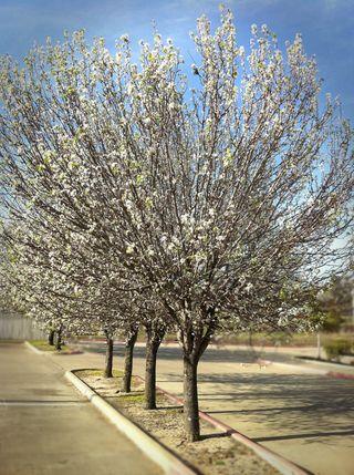 Homedepottrees