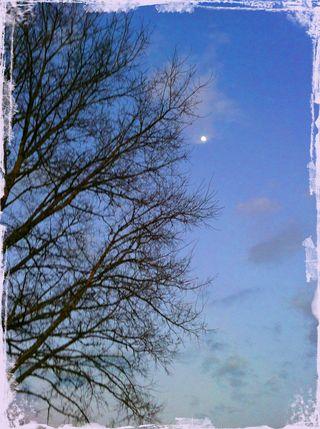 MoonThroughTreesMaskblog