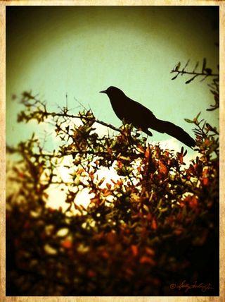 BirdBlackGreenRed