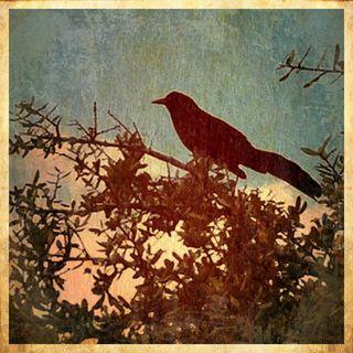 BirdBlood&Bluegreen
