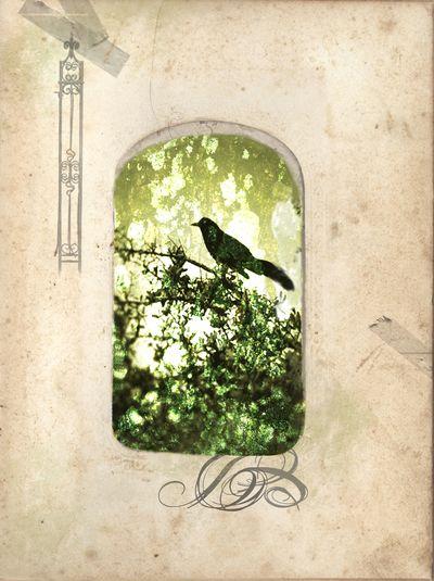 BirdGreenalbumpage