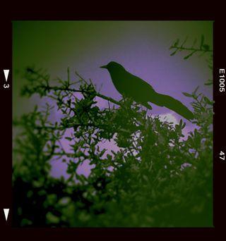 BirdVioletandSage