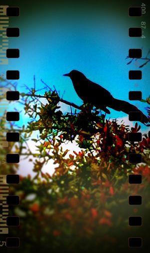 BirdFilmat8