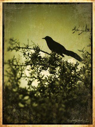BirdpeagreenBeige&darkFLat