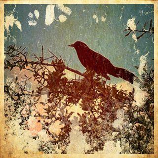 BirdSnowGrunge