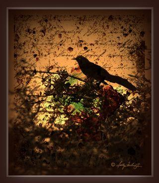 BirdBrownFrame