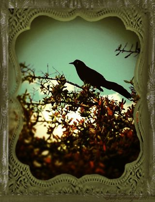 BirdGrenlaceframe