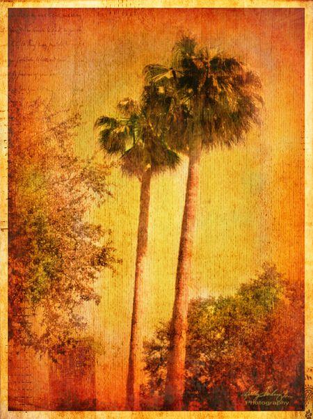 TangerineTrees