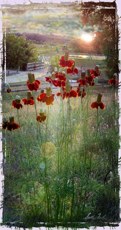 Flowerlightblog