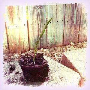 Plantblog