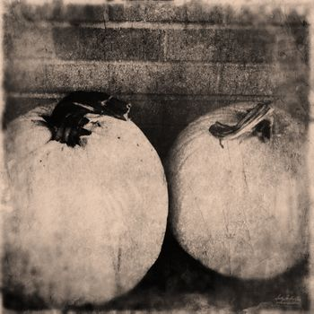 TWOPumpkins